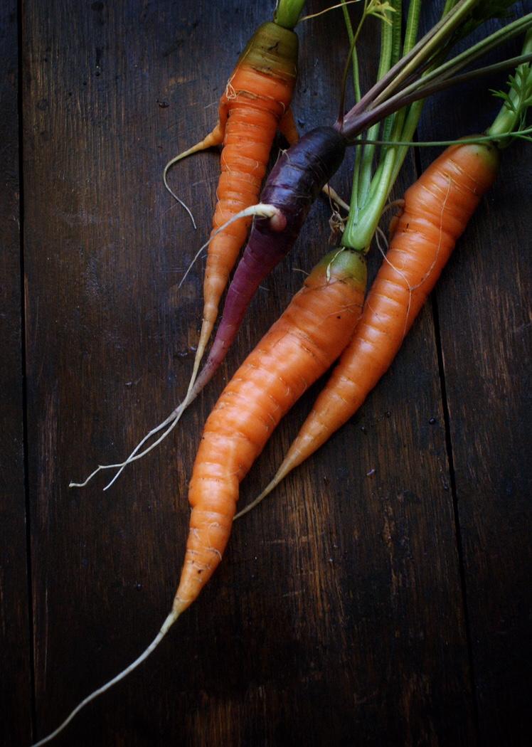 Home grown purple and orange carrots