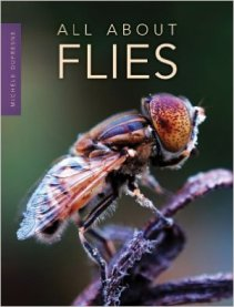 all about flies