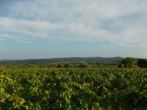 Pic Saint-Loup3