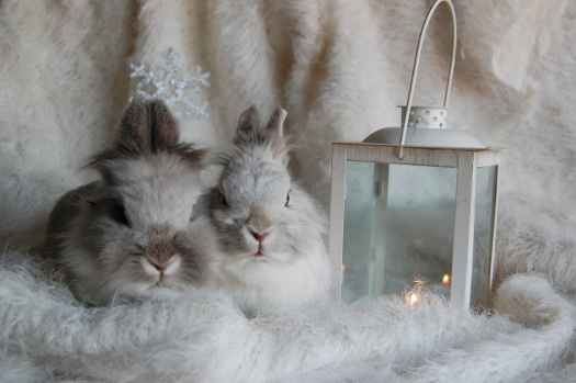 two beige rabbits beside candle lantern