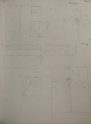 botanicalillustration