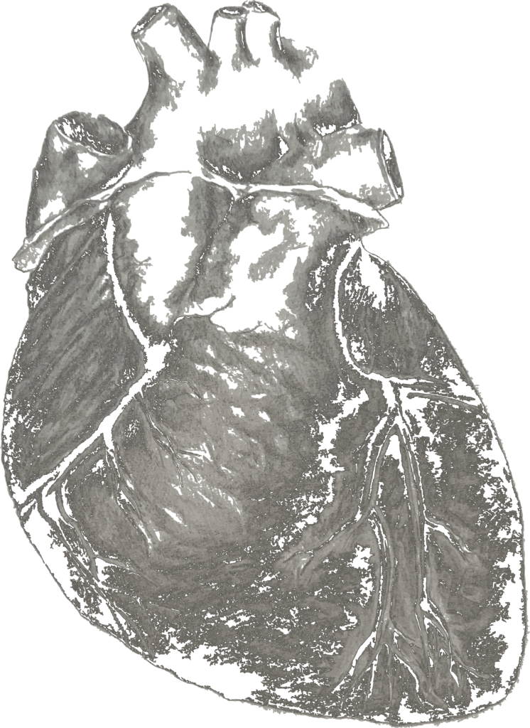 cardiac drawing