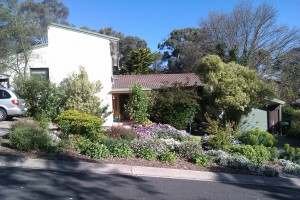 front garden spring 2011