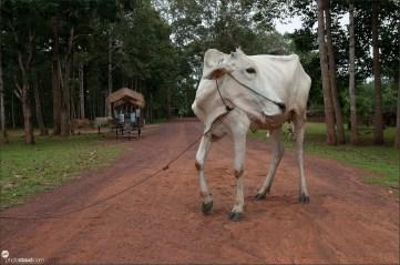 cambodia-village-001