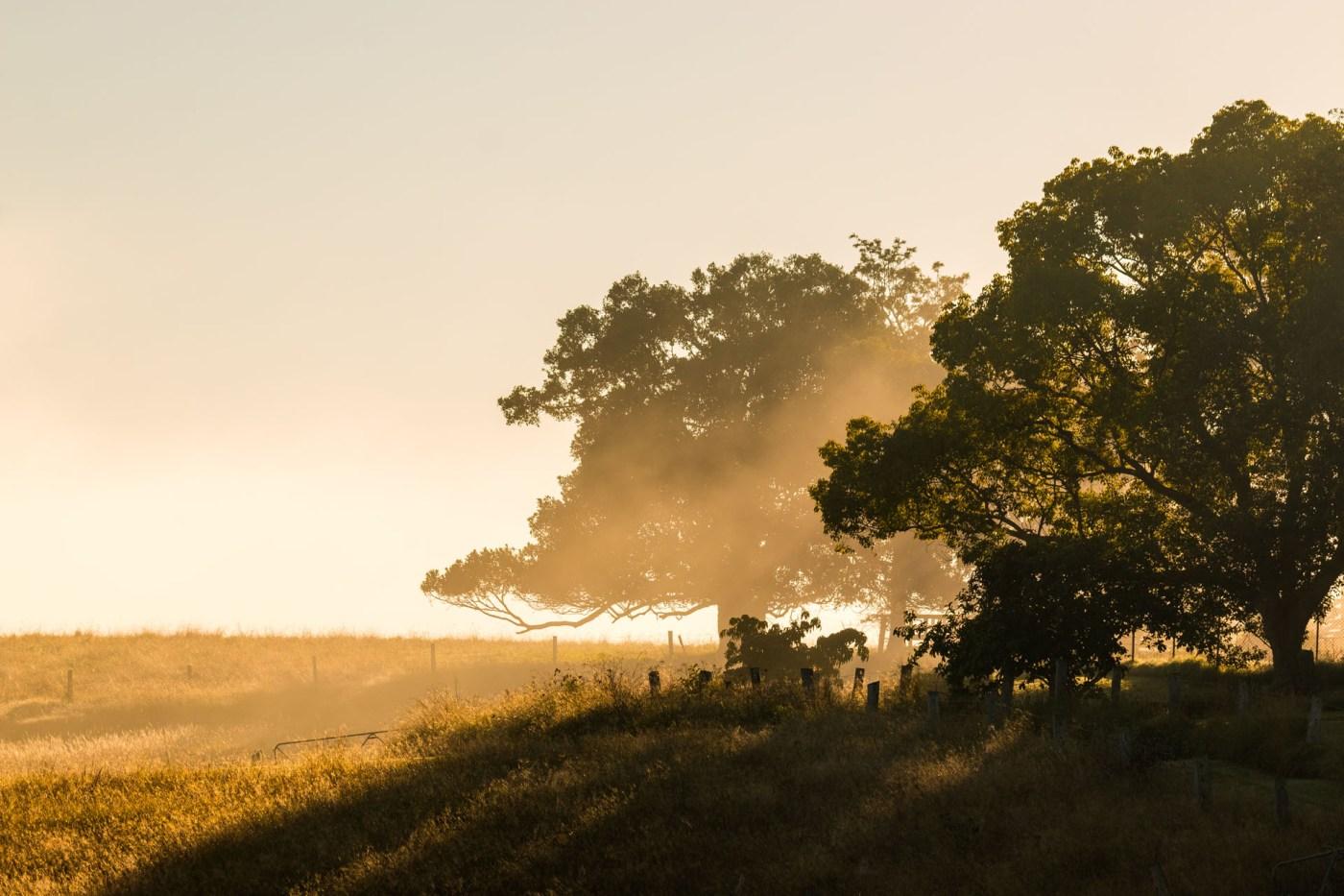 Golden fog - Franzi Photography