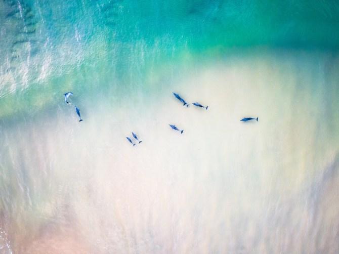Dolphin Magic - Franzi Photography