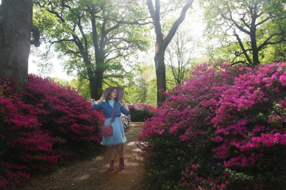 Isabella Plantation, Richmond Park - While Richmond Park itself is deserving of it's own section, Isabella Plantation is special enough to deserve its own recognition. It is a small fenced off wooden wild garden where a wide variety of Azalea bushes were grown. While it's beautiful throughout the year, it's especially worth going between April and late June when the Azaleas are in full bloom. That's when you get images such as below, but go early as it does get crowded in the summer months on weekends.