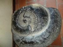 tour caracol 300 millones de años puyango