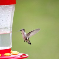 Hummingbirds, My Love of Summer