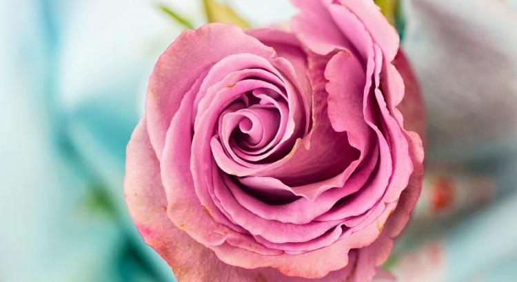 Mensagem De Bom Dia Para O Amor 49 Frases Lindas