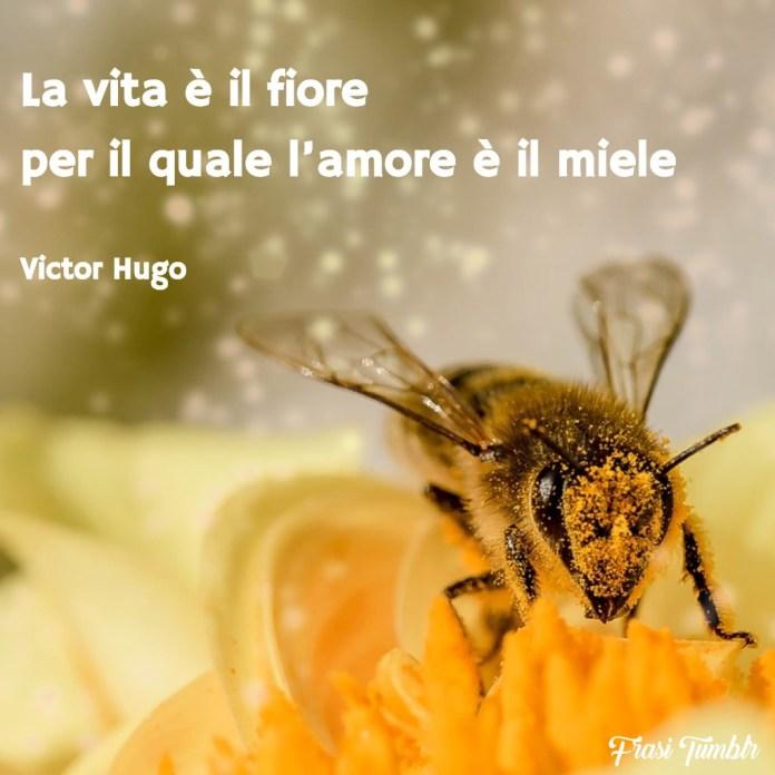 frasi-amore-vita-fiore-miele