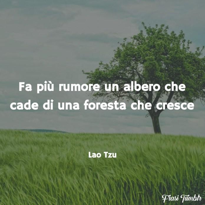 frasi-sagge-saggezza-brevi-albero-foresta