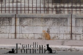 Parisian cat