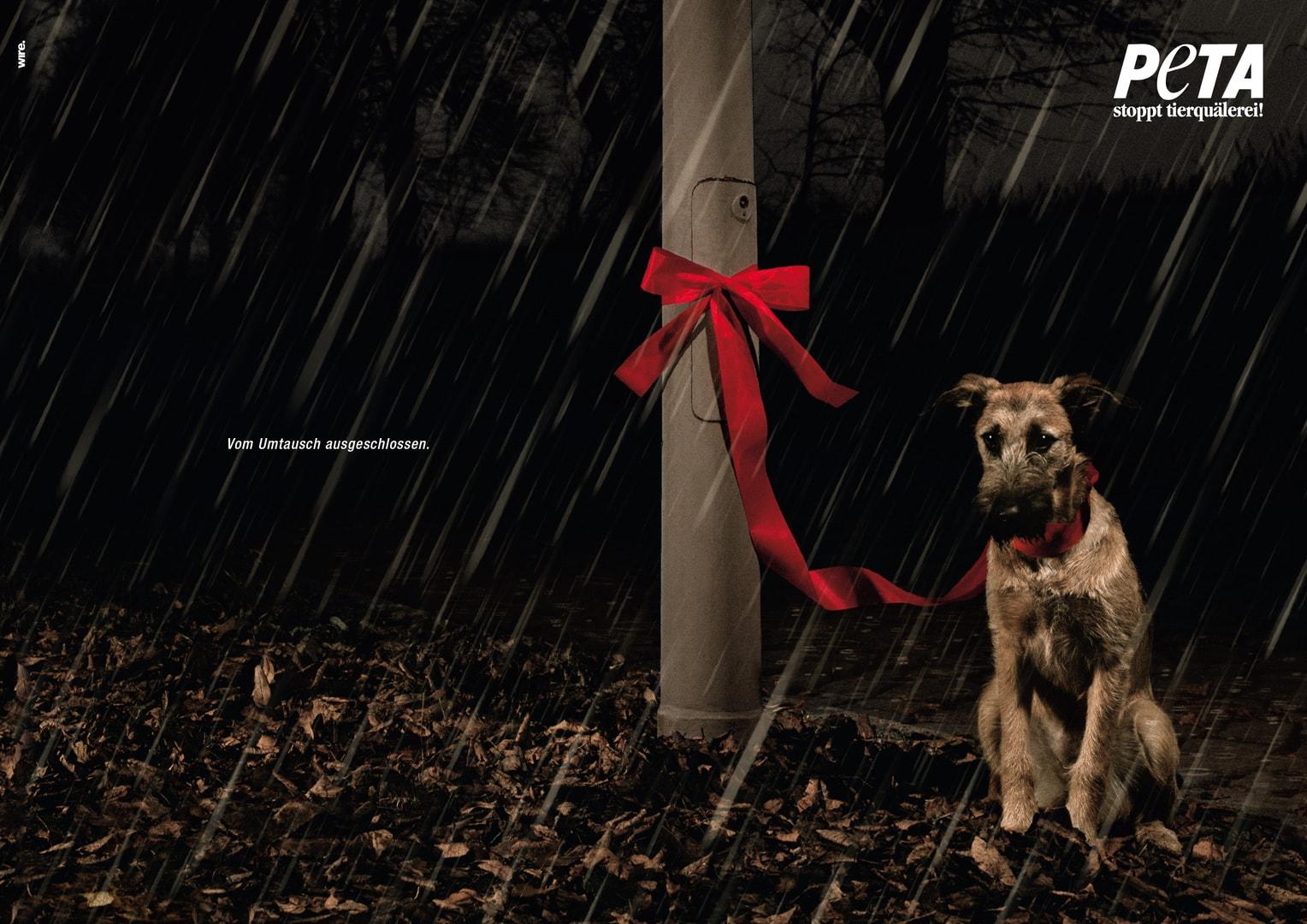 Tiere als Weihnachtsgeschenk? Am besten eine Ratte! Frau Mutter Blog