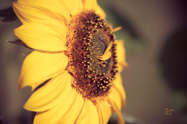 Sonnenblühte anders