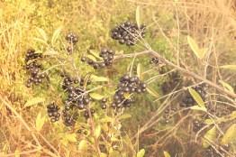 herbsfruechte-schwarz