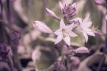 Blütenmakros und ich weiss nicht wie diese tolle Pflanze heißt