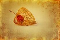 Herbstliches 2