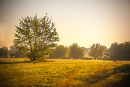 morgenwiese-baum