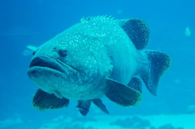 Ginsburg: Grouper Aren't Tangible Objects