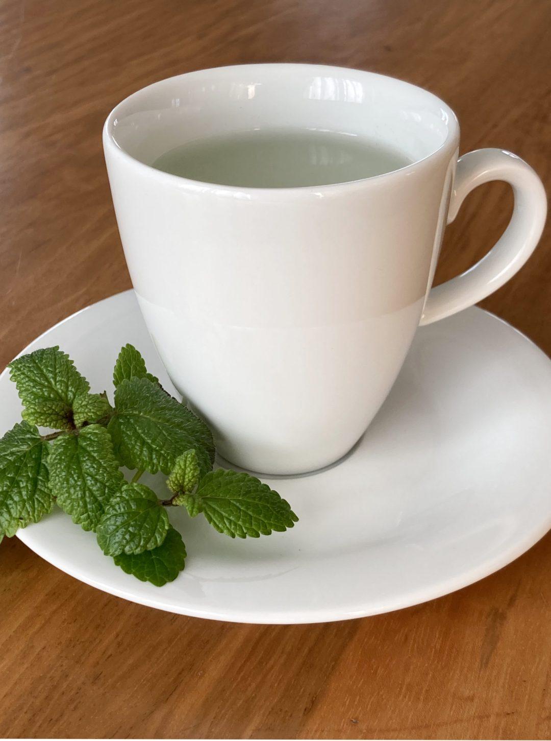Zitronenmelisse Tee Tasse Frau Fadegrad
