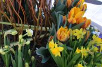Frühlingsknospen (2)