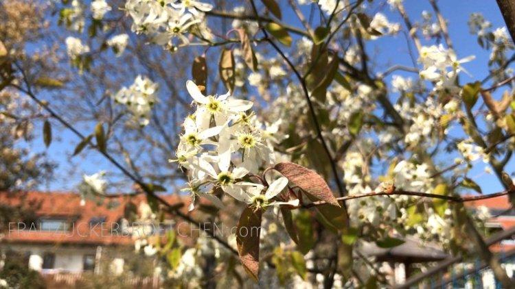 Mein_April_in_Bildern_frauzuckerbroetchen