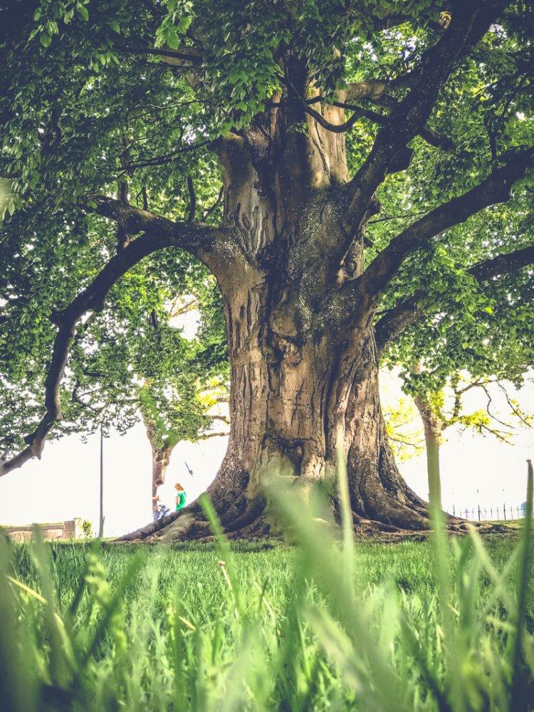 Überlingen_die wunderschöne Stadt am Bodensee_im Park