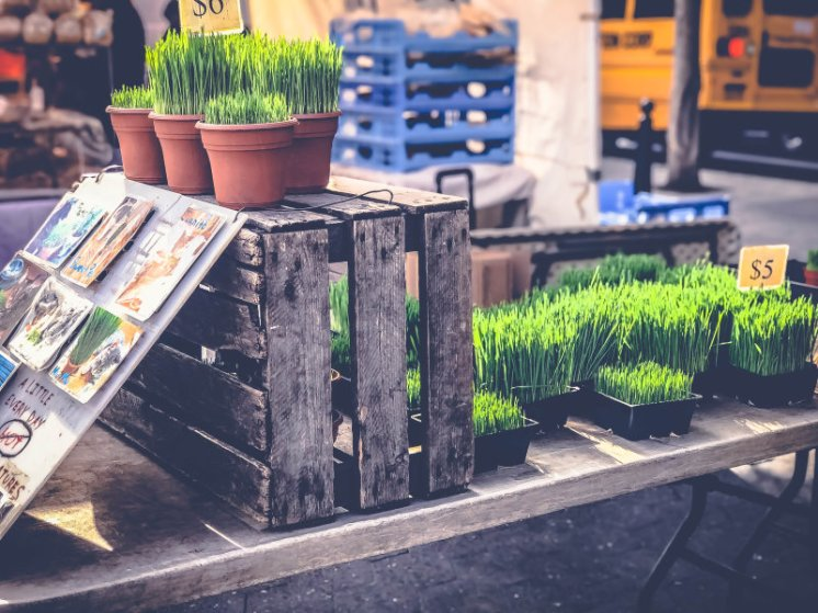 Märkte in New York_ Der Union Square Greenmarket12