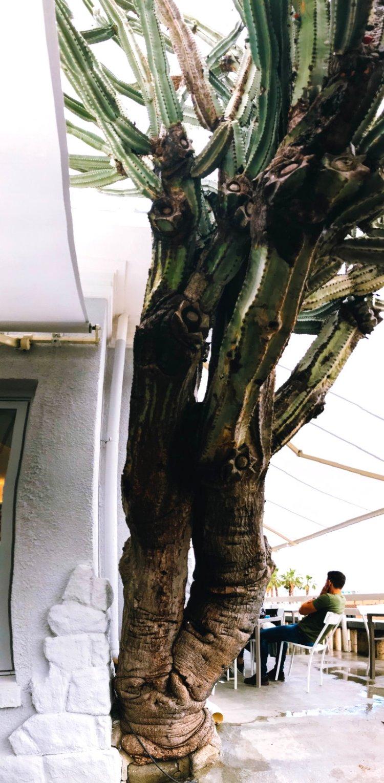 Der größte Kaktus meines Lebens Sanremo