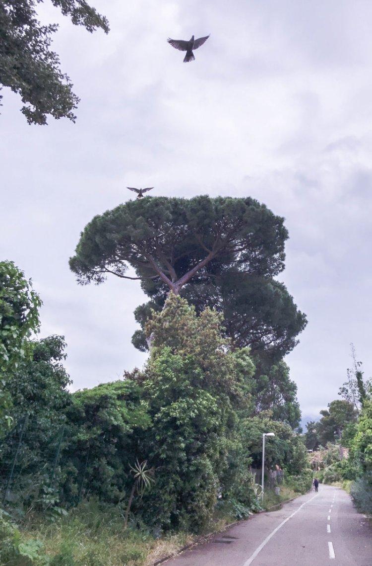 Pista Ciclabile del Parco Costiero della Riviera dei Fiori Sanremo