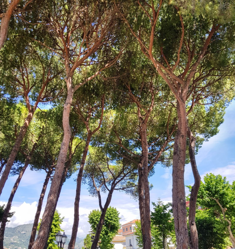 Ein kurzer Abstecher nach Ventimiglia // Mai 2018