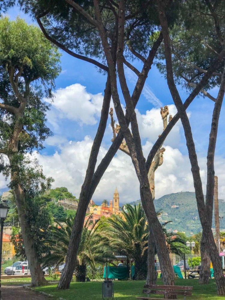 Kieferbäume im Giardini Pubblici Park Ventimiglia.jpg