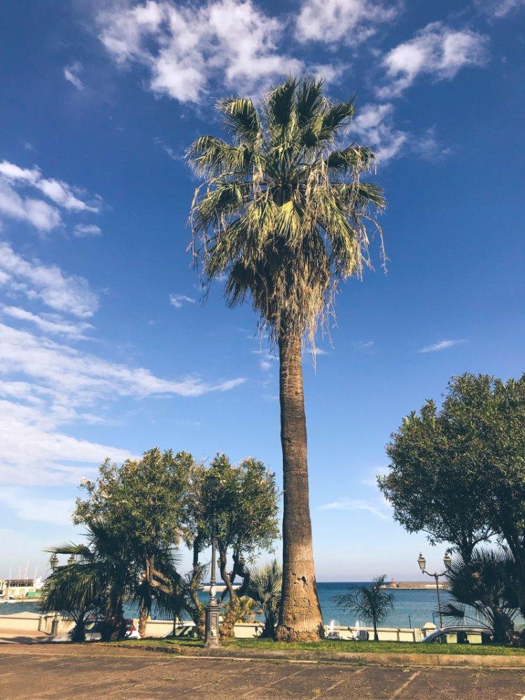Palmen in Sanremo