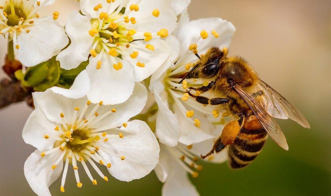 La sapienza delle api