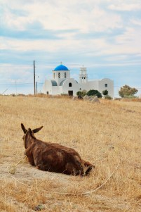 A resting donkey