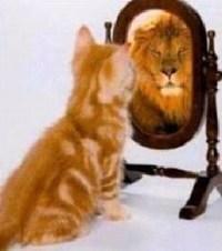 Gato que se cree león