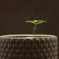 Want met een wietplant kun je reclame voor energie maken