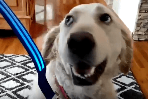 LED Rechargeable Dog Leash Review