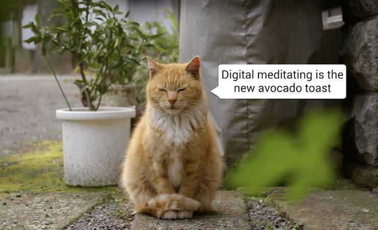 Cat-meditating.jpg