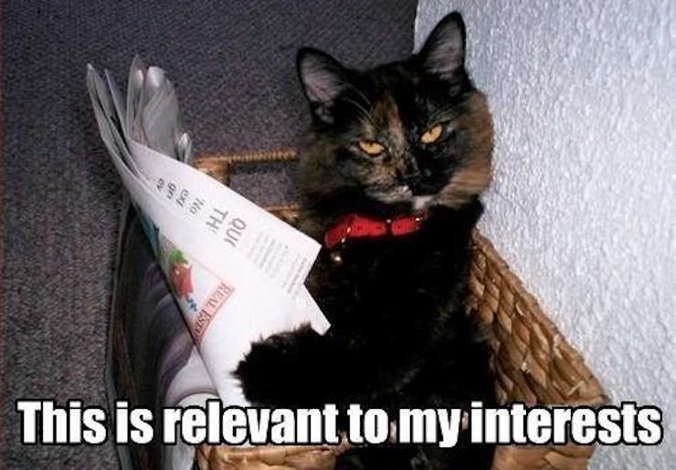 cat-interests.jpg