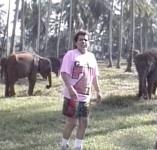 FPelephant
