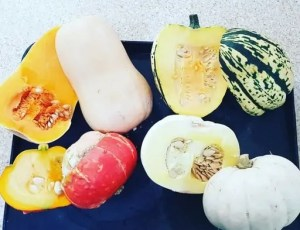 Easy Fall Autumnal Squash Recipe