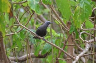 Oiseau - Ile Cousin