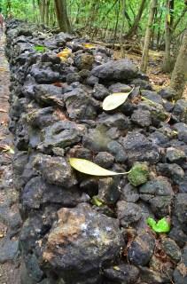 Mur fait de fiantes d'oiseaux- Ile Cousin