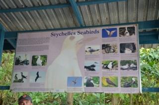 Les espèces d'oiseaux aux Seychelles