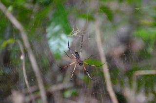 Araignée - Ile de la Digue