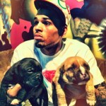 Chris Brown Selling Pit Bulls Online & New Toy Line 'Dum English' To Benefit His Charity