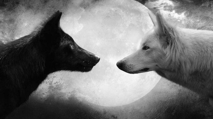 Les deux loups intérieurs