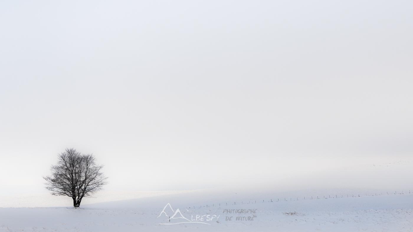 Seul dans l'Eden blanc (Plateau de l'Aubrac) n°0224